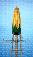 Corn_Cob_Canvas